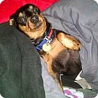 Adopt A Pet :: Brutus - Columbus, OH