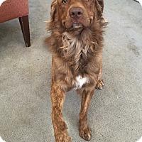 Adopt A Pet :: Max - Tracy, CA