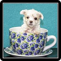Adopt A Pet :: Baeu - San Dimas, CA