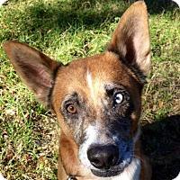 Adopt A Pet :: Jake Blue Eye - Orlando, FL