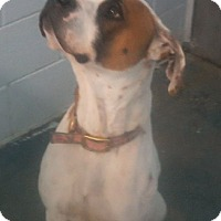 Adopt A Pet :: Rocky - Clear Lake, IA