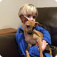 Adopt A Pet :: Gene (2 of 2) - Whitestone, NY