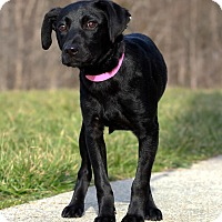 Adopt A Pet :: Aimee ADOPTION PENDING - Waldorf, MD