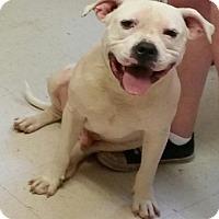 Adopt A Pet :: Sonny- Courtesy Listing - Fredericksburg, VA