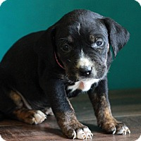 Adopt A Pet :: Tampa - Waldorf, MD