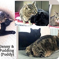 Adopt A Pet :: Jenny & Pudding (Puddy) - Oakville, ON