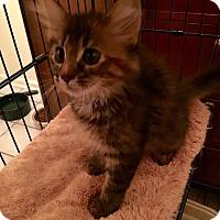 Adopt A Pet :: Lily Pilly - McDonough, GA