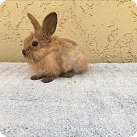 Adopt A Pet :: Egg Roll - Bonita, CA