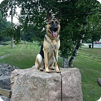 German Shepherd Dog Dog for adoption in Blackstock, Ontario - Harley
