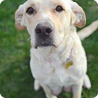 Adopt A Pet :: Dandelion - Salt Lake City, UT