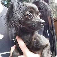 Adopt A Pet :: Thelma - Gainesville, FL