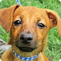 Adopt A Pet :: Rocky - Germantown, MD