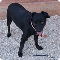 Adopt A Pet :: Cookie - Apple Valley, UT