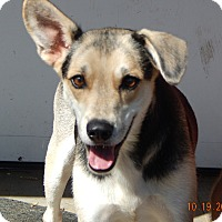 Adopt A Pet :: Jinx (37 lb) Close To PERFECT! - Williamsport, MD