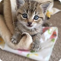 Adopt A Pet :: Ezra - Wichita, KS