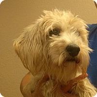 Adopt A Pet :: Benny - Oviedo, FL