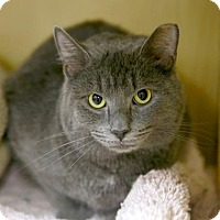 Adopt A Pet :: Fiddy Shades - Kettering, OH