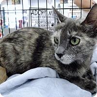 Adopt A Pet :: Naomi - Garland, TX