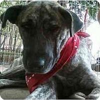 Adopt A Pet :: Nikki - Alexandria, VA