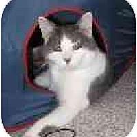 Adopt A Pet :: Jaspurr - Montgomery, IL