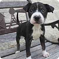 Adopt A Pet :: Hank - Stilwell, OK