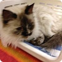 Adopt A Pet :: Cecilia - Fort Lauderdale, FL