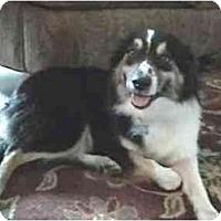 Adopt A Pet :: Kellie - Orlando, FL