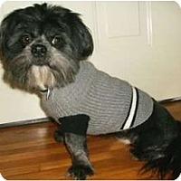 Adopt A Pet :: Watson - Mooy, AL