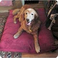 Adopt A Pet :: Buffy - Denver, CO