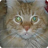 Adopt A Pet :: Jess - Arlington, VA
