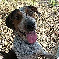 Adopt A Pet :: Livingston - Albany, NY