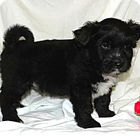 Adopt A Pet :: *Prince George - PENDING - Westport, CT