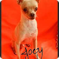 Adopt A Pet :: Joey - Escondido, CA