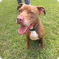 Adopt A Pet :: Munson - Berlin, CT