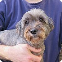 Adopt A Pet :: Sadie - Tracy, CA