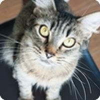 Adopt A Pet :: Lotte - Vancouver, BC