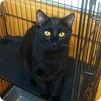 Adopt A Pet :: Sarah - Lafayette, CA