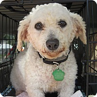 Adopt A Pet :: Cyan - DAYTON, OH