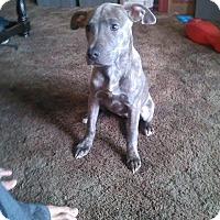 Adopt A Pet :: Mammas - Sacramento, CA