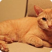Adopt A Pet :: Karma 04-4010 - Fremont, CA