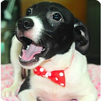 Adopt A Pet :: Avis - Surrey, BC