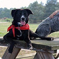 Adopt A Pet :: Chrissy - Westport, CT