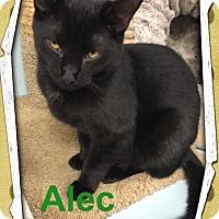 Adopt A Pet :: Alec - Leonardtown, MD