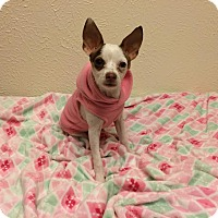 Adopt A Pet :: Jada - Dallas, TX