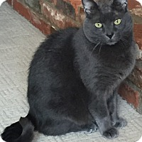 Adopt A Pet :: Chevis_Courtesy Post - Columbia, MD