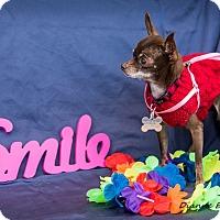 Adopt A Pet :: Bon Bon - San Marcos, CA