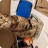 Adopt A Pet :: Jade-K - Glendale, AZ