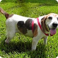 Adopt A Pet :: Katy II - Tampa, FL