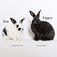 Adopt A Pet :: Iris and Tipper - Jurupa Valley, CA