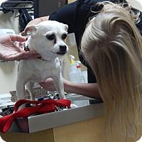 Adopt A Pet :: Diamond - West Deptford, NJ